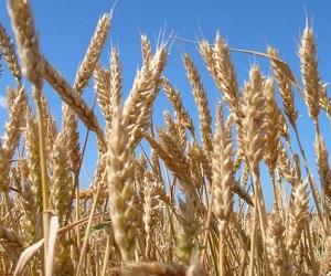 Страхование в растениеводстве получит новую жизнь